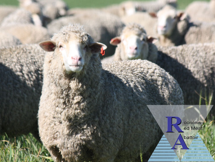 Red Meat Abattoir Association